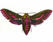 British Moth Print - Limited Edition