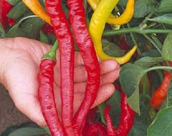 Sweet Cayenne Pepper Seeds 25 Sweet Pepper Seeds