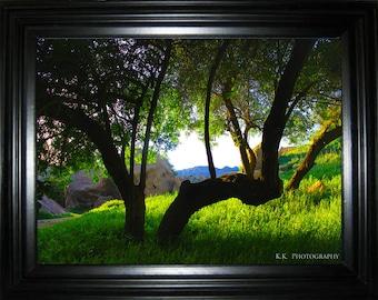 K.K. Photography - Under The Simi Tree - 1st Series Print