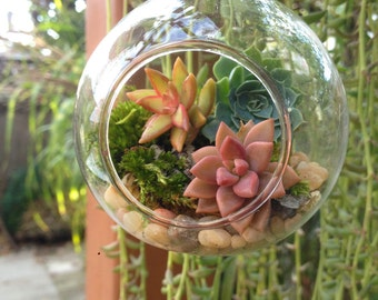 Hanging terrarium/succulent terrarium/hanging planter/succulent garden/succulent wedding decor/party favor/moss terrarium/air plant