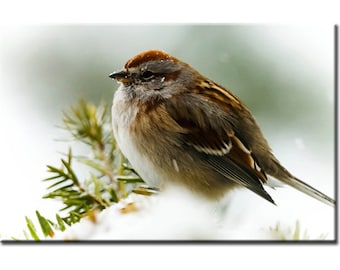 Winter Sparrow - Nature Photography Print