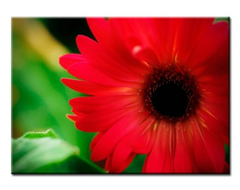 Blooming Red - Nature Photography Print