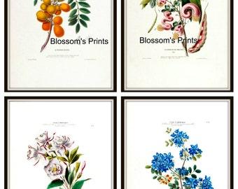 Flore D' Amerique set of four Floral prints from the 1800's