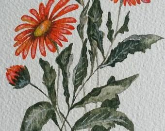 Marigold card. hand painted flower card. British flower card. orange flower. English country garden