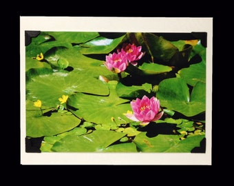PHOTO GREETING CARD, nature photography, blank card, photo note card, birthday card, Christmas gift, special occasion note card, lily pad
