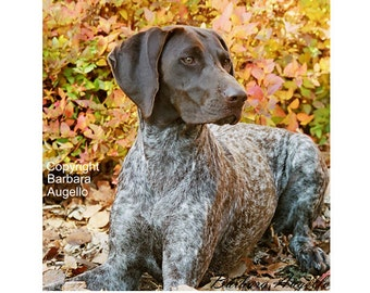 "Shop ""german shorthaired pointer"" in Collectibles"