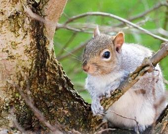 Squirrel Photo Digital Download Instant Background Creative Content