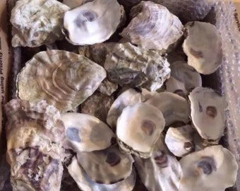 50 Oyster Shells Mixed Size  Clean Craft Art Wedding