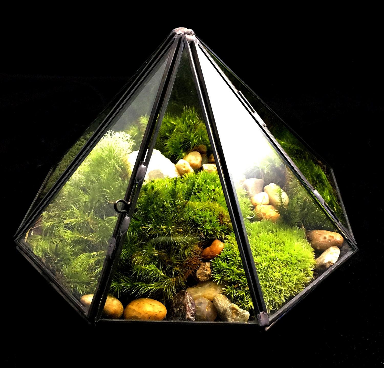 moss terrarium care instructions