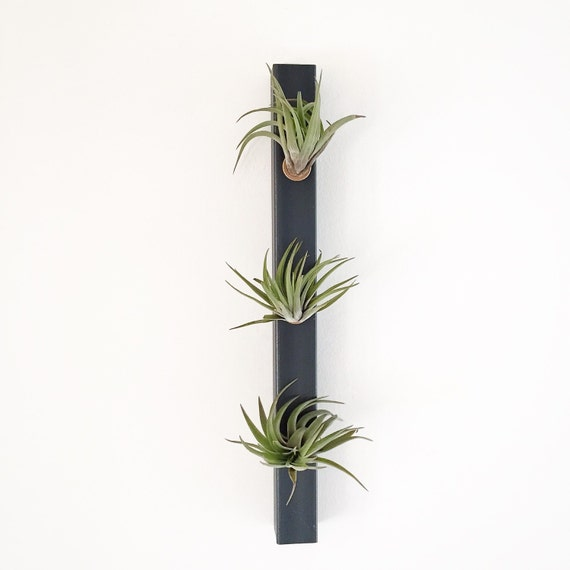 ... - Hanging Planter - Wall Planter -Indoor Planter -Air Plant Holder