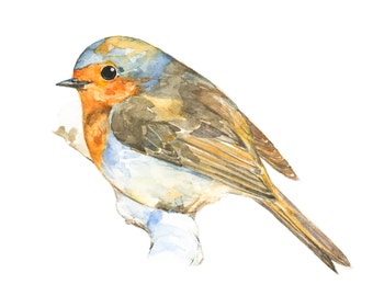 Robin watercolor painting - bird watercolor painting - 5x7 inch print - 0029
