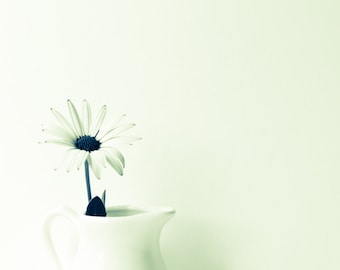 Limited Edition Print, #1/70, Fine Art Photography, Daisy in jug, Monochrome, Flower, Flora, Wall Art, Artistic