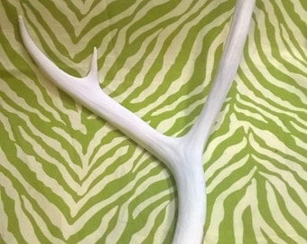 Mule Deer Antler Shed Painted White