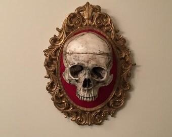 Skull of Nobility