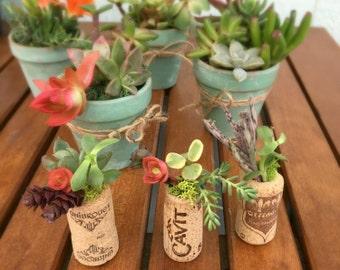 Cork Succulent Party Favors, Wine Cork Succulent Garden, Cork Succulent, Mini Succulent, DIY Succulent Favors, Tiny Succulent Favors