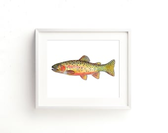 Greenback Cutthroat Trout Fine Art Print