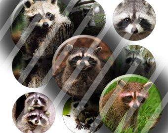 "Digital Bottle Cap Collage Sheet - Raccoons - 1"" Digital Bottle Cap Images"