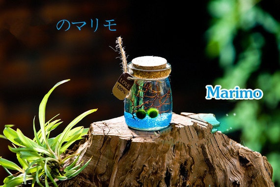 Gift Guide for Nature Lovers - International Shipping. Mini Marimo Aquarium Kit With Aquatic Living Marimo Ball/Sea Fan/Tiny Shells/Pet Vial-Wish Gifts For Girlfriend. Unique living nature gift.