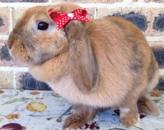 Red and white polka dot ribbon bows with heart cabochon for bunnies, pet rabbit clothing and accessories