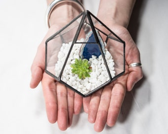 Diddy Glass Terrarium