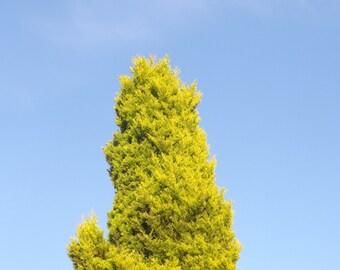 Original A4 photograph tree top
