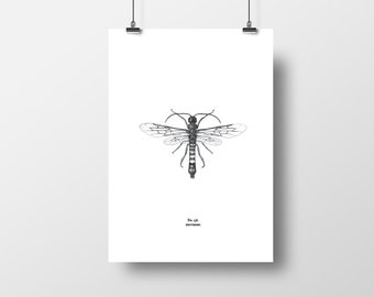Asian Horntail Insect A3 graphic print (A4 also available)