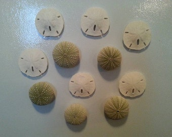 Sea urchin or sand dollar magnet