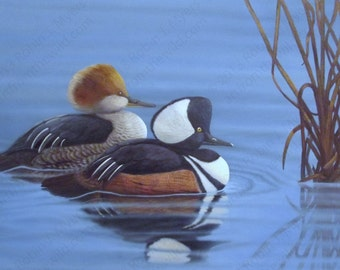 Original Wildlife Art, Duck Painting, Merganser Painting, Gifts for Outdoorsmen, Wildlife Paintings