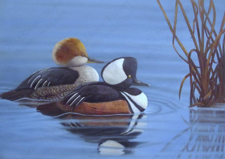 Original Wildlife Art Duck Painting Merganser Painting
