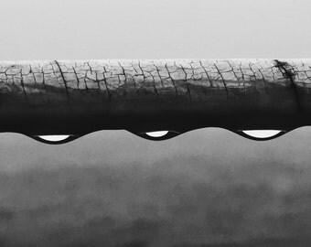 Water droplets - black and white - 5 x 7 print