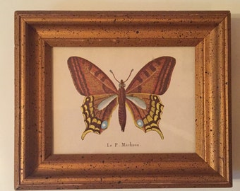 "Le P Machaon Moth Butterfly Vintage Framed Print 7.5"" x 6"" Wall Decor"