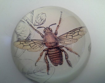 Buzzzzzzzz....wasp glass paperweight