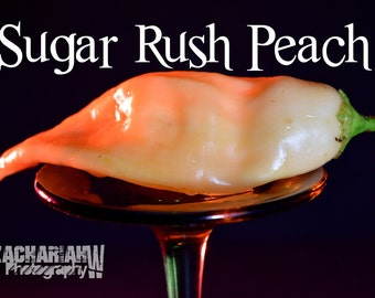 Sugar Rush Peach (15+ Seeds)