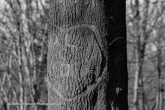 Nature, Names on a tree, Black & White photography, Park Photography, Wall Art, Wall Decor