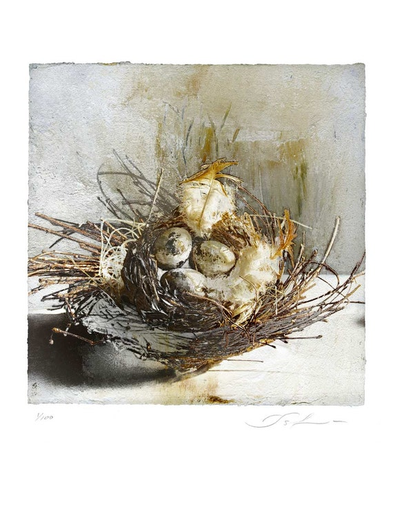 The Nest, botanical art, bird art, nature print, wall decor, limited edition print, warm colors, organic art, garden art, fine art print