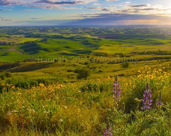 Wildflowers at Sunset on the Palouse: Fine Art Photography
