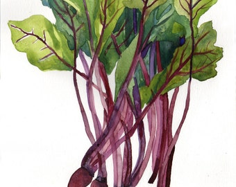 Watercolour of beet