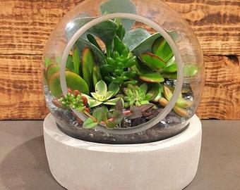 Succulent Terrarium, Concrete Base Round Glass Globe
