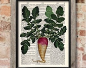 Radish print, Dictionary art print, Kitchen decor, Botanical art print, upcycled dictionary page, Home Wall Decor, Gift poster [ART 062]