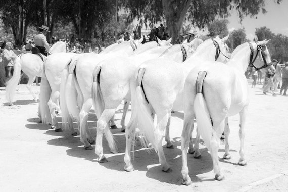 FAIRYTALE HORSES 5.  Spanish Horses, Black And White Print, Monochrome Print, Horse Picture, Equine Art, Photographic Print.