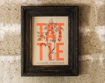 Tattie (or potato) illustrated riso print, A3 modern, natural history-inspired limited edition print