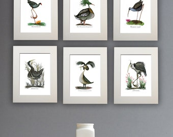 Fun Marshland Bird Prints - set of 6 unframed A4 prints