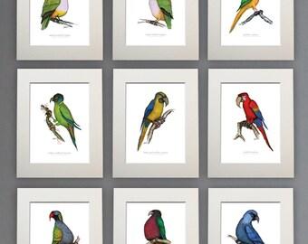 Parrot Prints - a set of 9 unframed A4 prints