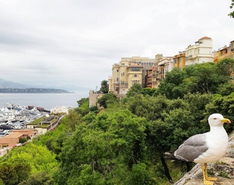 Monaco/View/Palace/Port/Yacht/Summer/Lifestyle/Prince/France/Italy/Deco/Hill/Sea/Home/Sky/Holidays/Top of the World/Free/Photography/Style