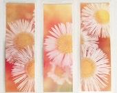 Set of 3 laminated photo bookmarks, prairie daisies