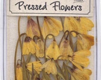 Yellow Fritillary  15 Pieces