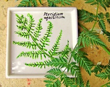 Botanical ceramic candle dish. Coaster hand-painted. Floral gift at mothers day. Summer fest décor. Fern drawing. Soap dish. Ceramic coaster