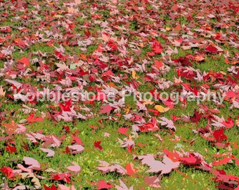 Fall leaves photography, Abstract soft focus print, Nature photography, Red fall leaves prints