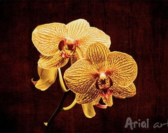 Orchids - yellow. Floral, nature, wall decor art.