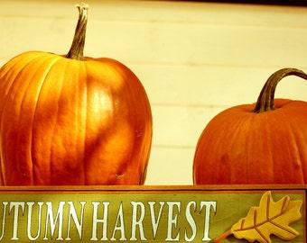 Harvest Fall Decoration